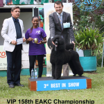 3rd Best in Show 158th EAKC Show