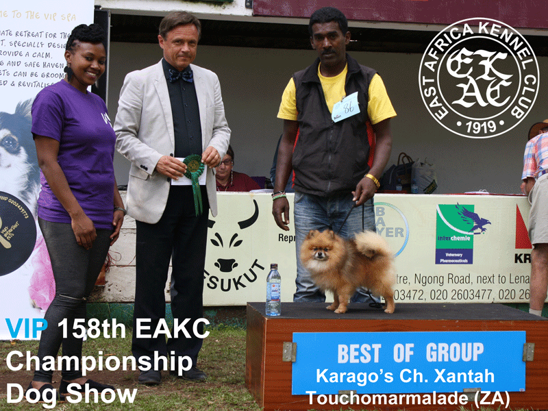 Best of Toy Group at the 158th EAKC Championship Dog Show