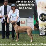 Best Veteran in Show at the 158th EAKC Championship Dog Show