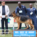 Reserve Best of Working Group at the 158th EAKC Championship Dog Show
