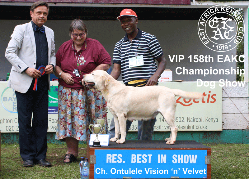 Reserve Best in Show at the 158th EAKC Championship Dog Show