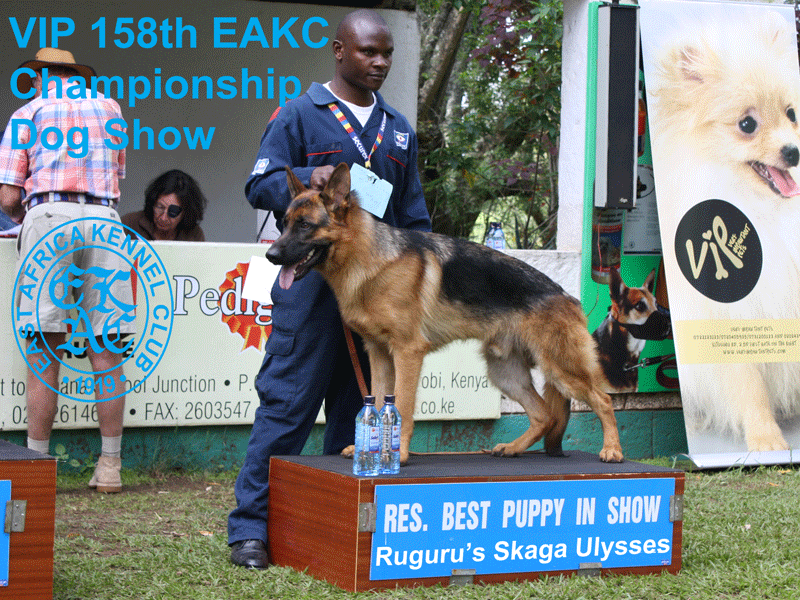 Reserve Best Puppy in Show at the 158th EAKC Championship Dog Show