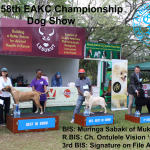 Best in Show Line-up at the 158th EAKC Championship Dog Show